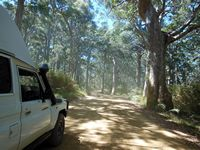 Karri Forest entrance to Cape Howe.
